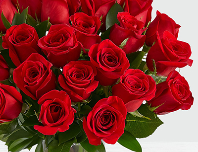 20 long stemed Red Roses_A - FromYouFlowers.pk
