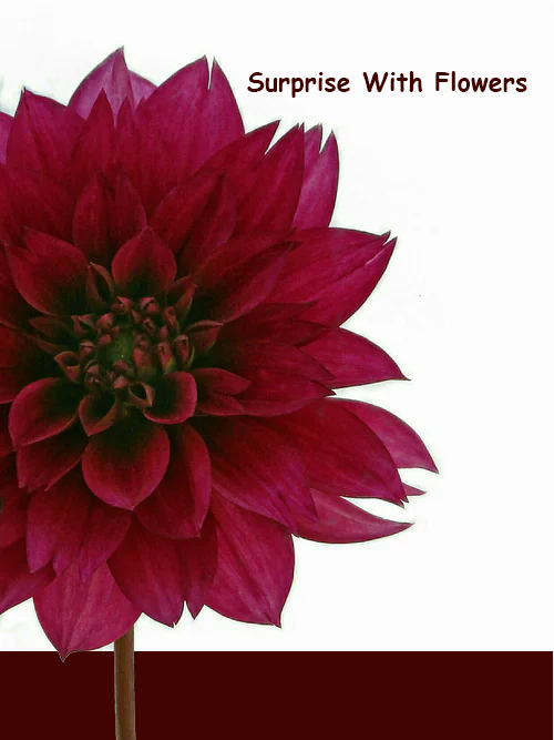 online flowers delivery stores in Pakistan